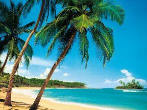 Fotoapet tropical island