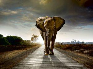 Fototapet mighty elephant