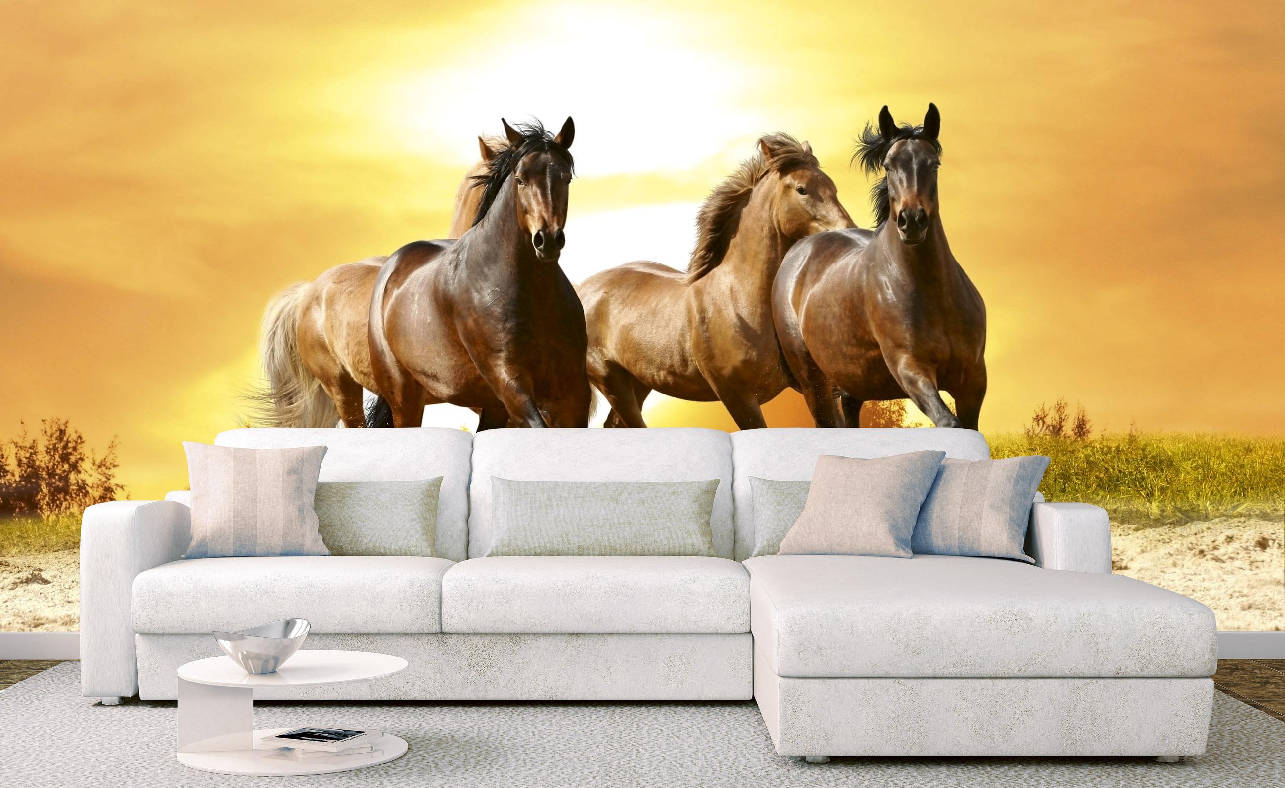 Fototapet horses