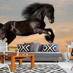 Interior Fototapet black horse
