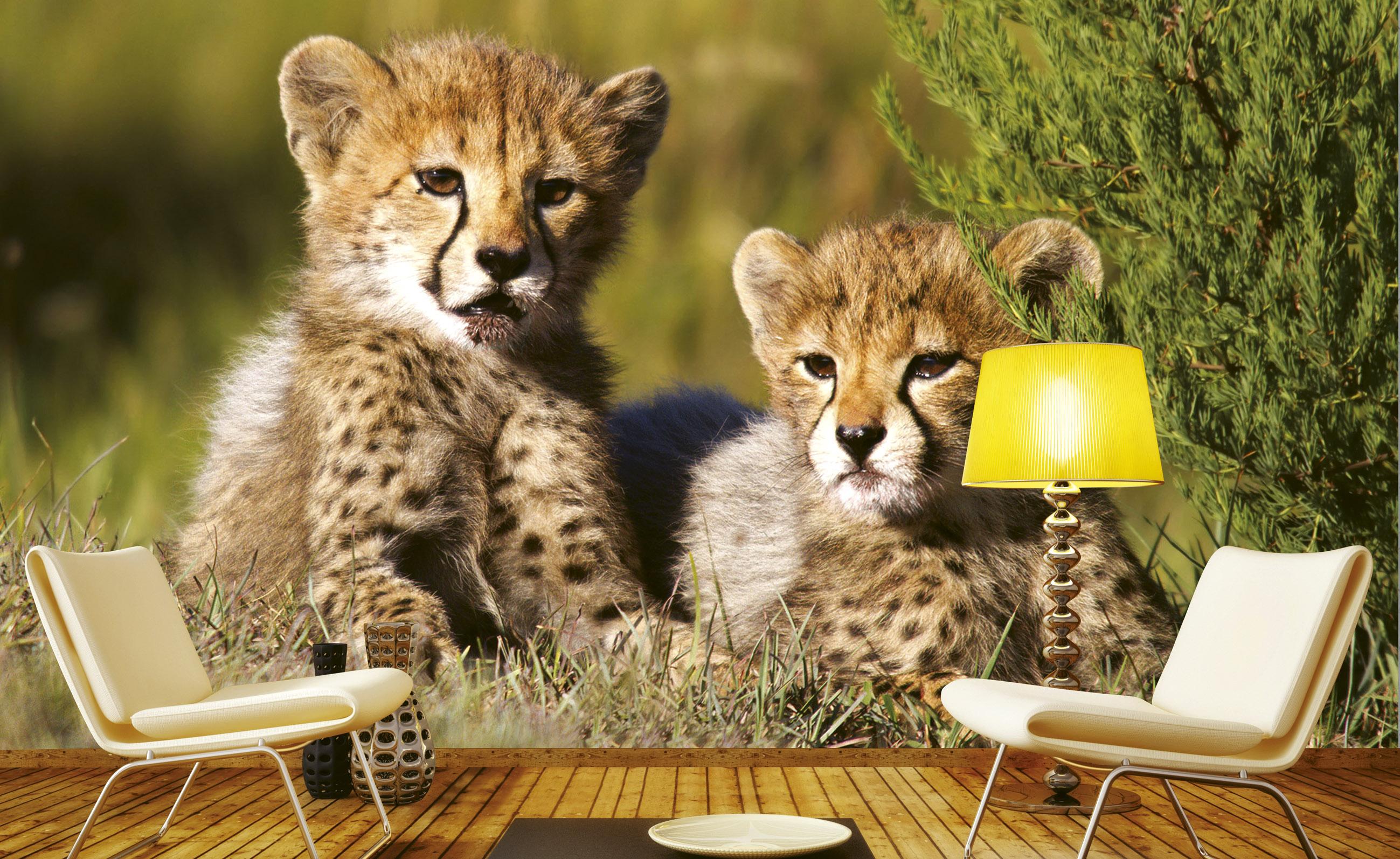Fototapet tiger cubs
